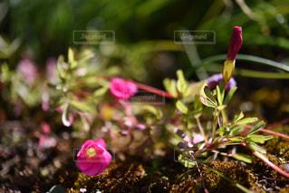 花の写真・画像素材[318355]