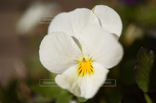 花の写真・画像素材[319068]