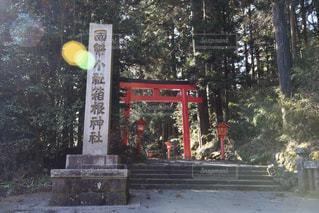 箱根神社の写真・画像素材[323311]