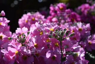 春 - No.359331