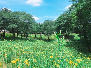 花の写真・画像素材[651061]