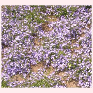 花の写真・画像素材[312753]