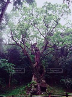 自然の写真・画像素材[311916]