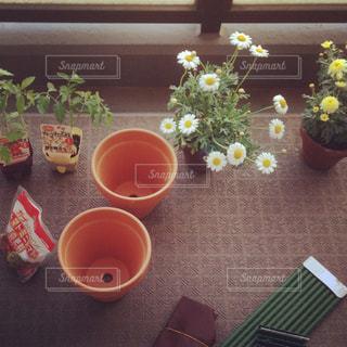花の写真・画像素材[324568]
