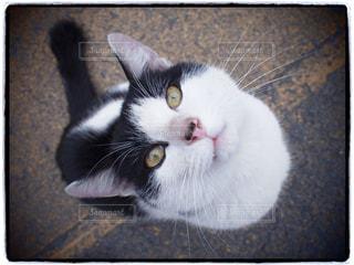 No.324592 猫