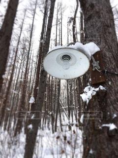 雪の写真・画像素材[333316]