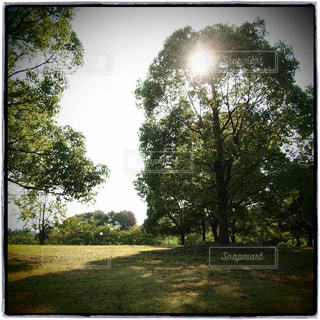 公園 - No.334608