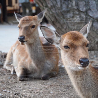 動物の写真・画像素材[335891]