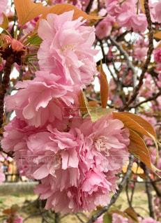 春の写真・画像素材[336860]