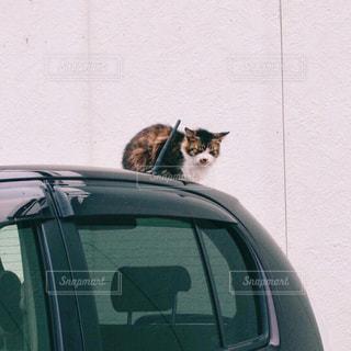 猫の写真・画像素材[345185]