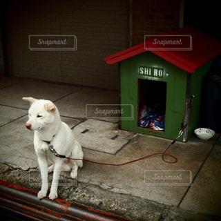 犬 - No.345199