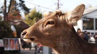 動物の写真・画像素材[358280]