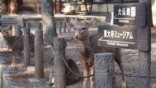 No.358289 動物