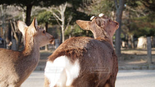 動物の写真・画像素材[358292]