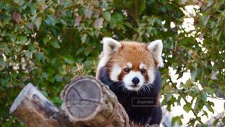 動物の写真・画像素材[407975]