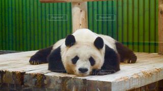 動物の写真・画像素材[407977]