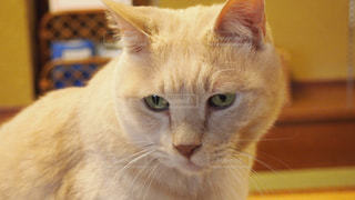 猫の写真・画像素材[409263]