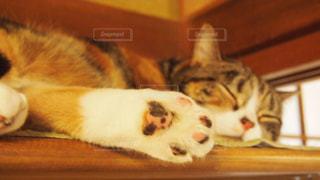 猫の写真・画像素材[409274]