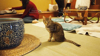 猫の写真・画像素材[409278]