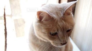猫の写真・画像素材[409280]