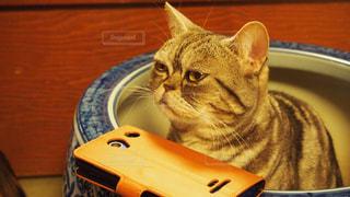 猫の写真・画像素材[409282]