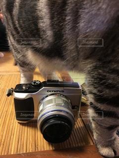 猫 - No.409329