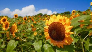 花の写真・画像素材[659754]