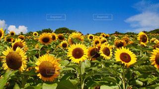 花の写真・画像素材[659950]