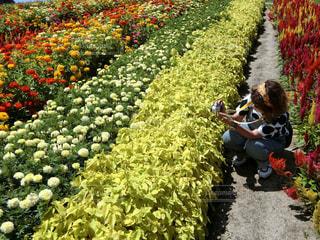 花の写真・画像素材[660760]