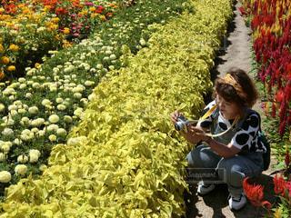 花の写真・画像素材[660768]