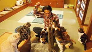 猫と戯れる男の写真・画像素材[752795]