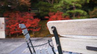 木製ベンチと紅葉の写真・画像素材[845241]
