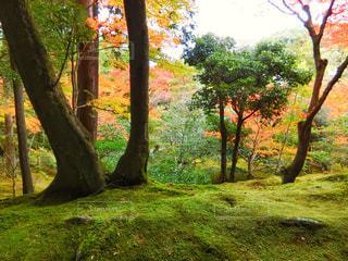 森の大きな木の写真・画像素材[864663]
