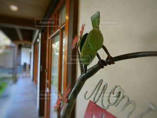 鳥の飾り物の写真・画像素材[865429]
