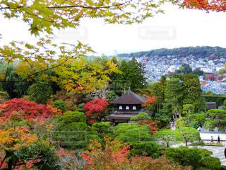 銀閣寺の写真・画像素材[865481]