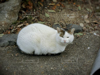 野良猫の写真・画像素材[963994]