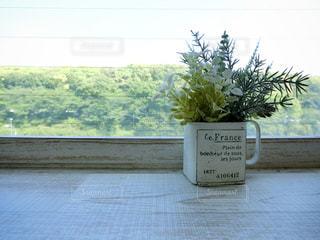 テーブルのグリーンの写真・画像素材[1152928]