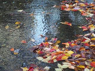 池の近くにの写真・画像素材[2768328]
