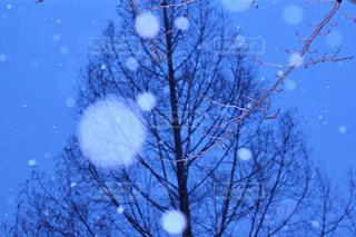 雪 - No.312134