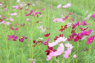 花の写真・画像素材[312238]