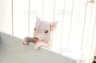 動物の写真・画像素材[316859]