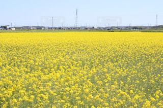 春の写真・画像素材[445739]