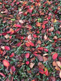 秋の写真・画像素材[312310]