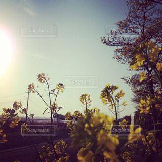 花の写真・画像素材[312487]