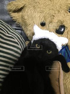 猫の写真・画像素材[312962]