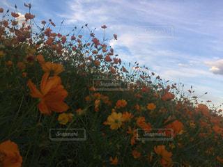 木の花の花瓶 - No.872000
