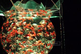 No.312909 魚