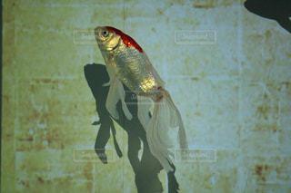 No.312910 魚