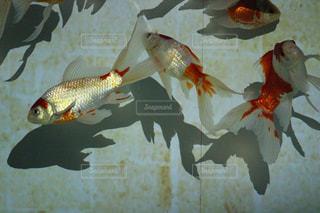 No.312911 魚