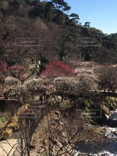 春はそこまでの写真・画像素材[337586]